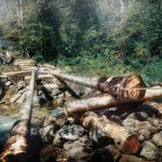 Волонтеры на Байкале строят мост «Новое начало» на тропе к пику Черского.
