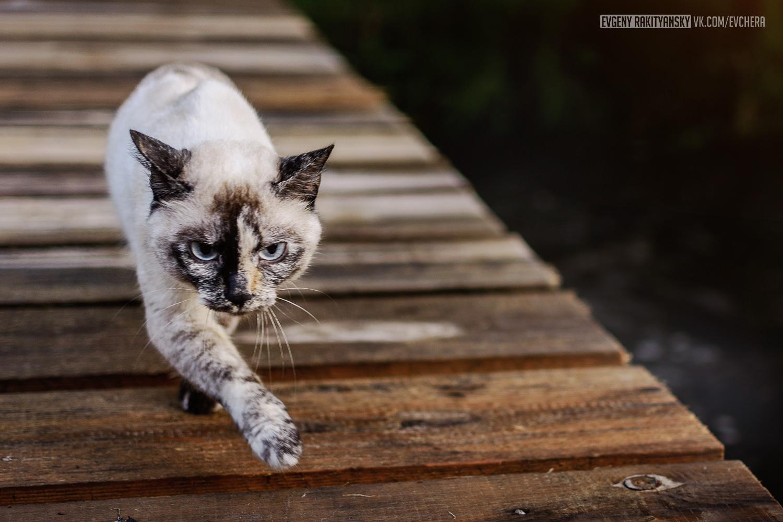 Кошка Няша, г. Байкальск