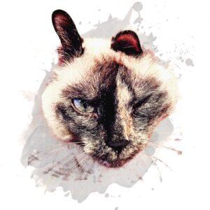 Няша, первая кошка-волонтер. Байкальск