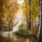 Тропа «Чайный путь» осенью.